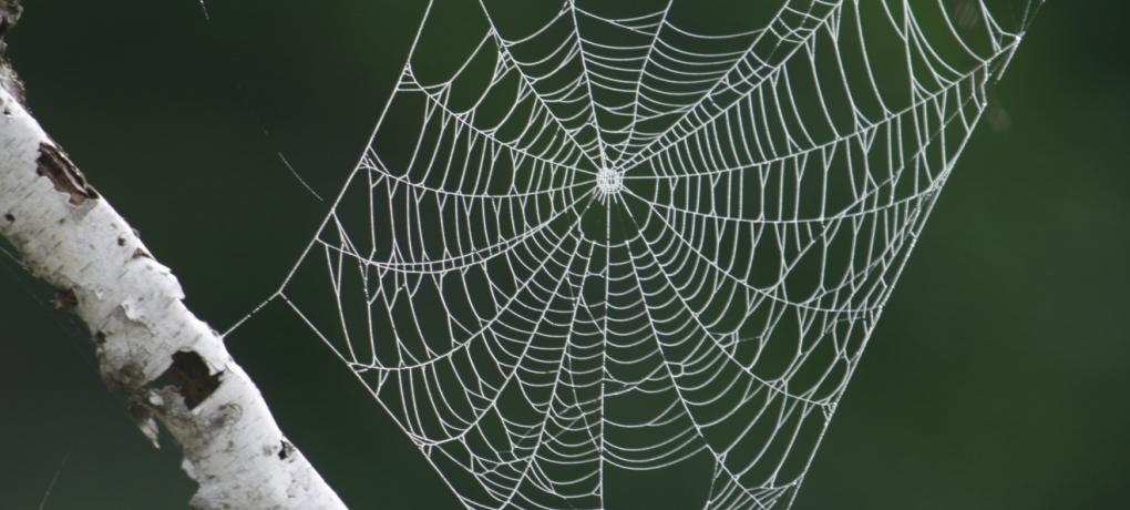 spindelnät1